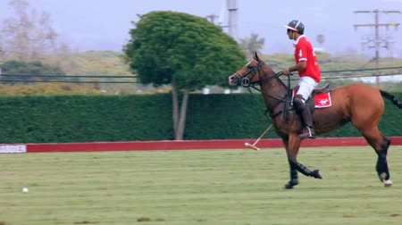konie : Polo Player Whacks Ball in Slow Motion.