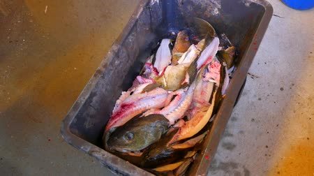 entrails : A workers hand throws fish skeleton into a black plastic crate. The skeleton of the cod fish after removing the fillet from the fish hips. Male legs in heavy rubber boots steps around the crate. Stock Footage