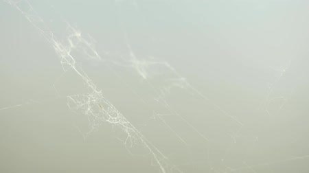 impressão tipográfica : The rest of the cobweb in a very strong wind, extreme close view. A Spiders Web in macro close up view, blurred background out of focus. Stock Footage