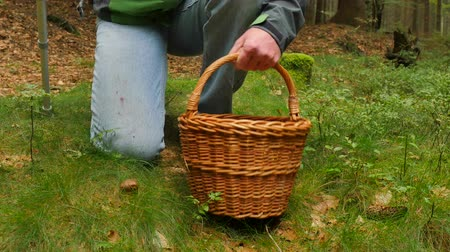 boletus edulis : Man with medicine crutch mushroom hunting. Man in blue jeans, green windcheater and wicker basket walk through forest and find boletus mushroom in needles. Hand cut off mushroom by pocket knife.