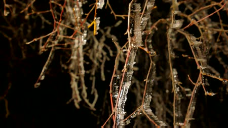 saçak : Night frost covered twigs and branches of a tree with blades of ice. Shining icy bark Stok Video