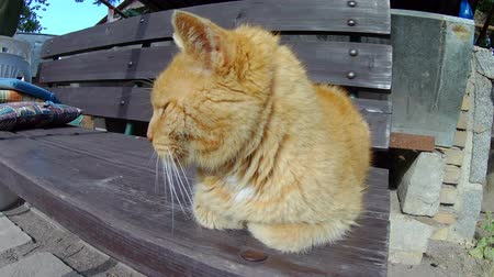 five striped : Old ginger cat sleeping on wooden bench.