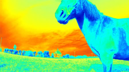 tay : Horse with industrial thermal camera scanner. Detecting of body heat loss
