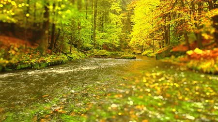 Calm mountain river flowing through colorful autumn forest.