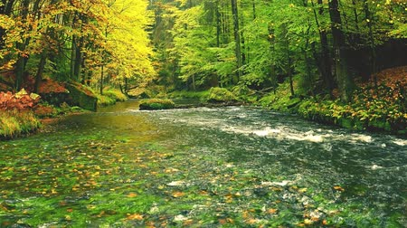Tilt shift camera footage. Autumn river in deep colorful leaves forest. River in autumn tree at forest