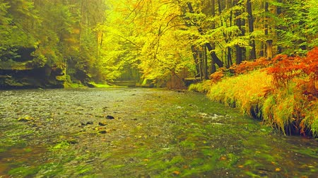 Autumn river. Fall natural landscape, colorful leaves on trees in park. Fall season. Outdoors, river. Stock Footage