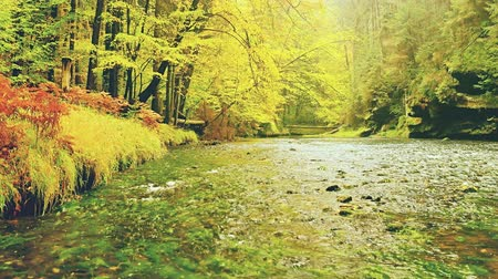 Yellow autumn forest  river. Beautiful autumn landscape. Stock Footage