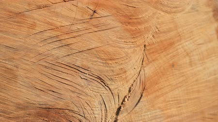 havlama : Cut spruce tree, cracks in log, saw dust with bark pieces. Detailed view. Stok Video