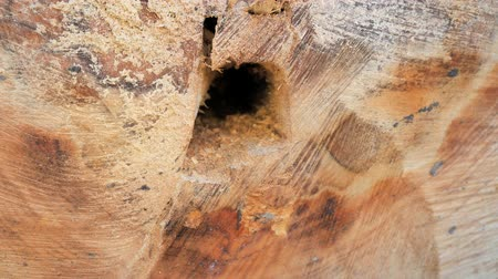faca : Cross-section of broken and sawn pine. Tree was powerful, clean and beautiful, but wood rotten inside