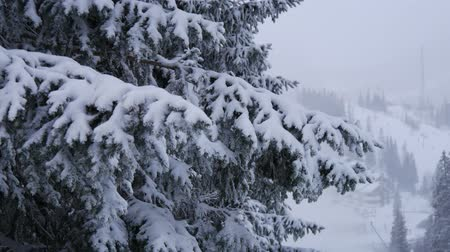 finlandiya : Sweden snow tree Stok Video