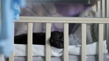 cradle : Black cat in a baby crib behind the bed railings