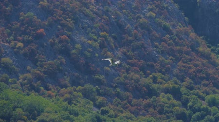 plachtit : Seagull flying against rocky mountain covered with treesю Handheld shot Dostupné videozáznamy