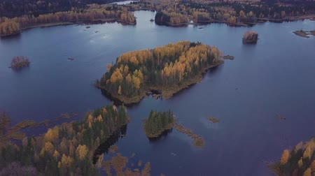 birch : Woody island on a blue lake in the middle of autumn forest. Aerial shot