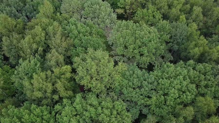 континентальный : Flying over treetops. Aerial drone shot of a green summer park