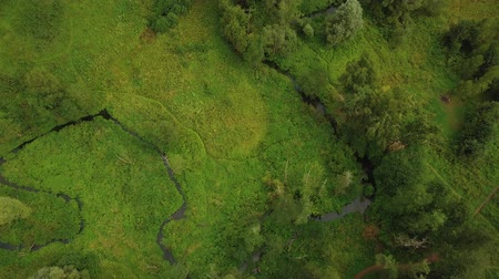 пастораль : Aerial of a little stream winding among green trees in summer park
