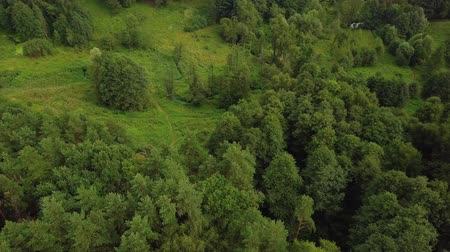 korona : Flying over treetops of park with green medows, little stream and narrow paths