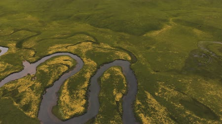 cercar : Aerial of winding river surrounded with green fields and blooming yellow flowers Stock Footage