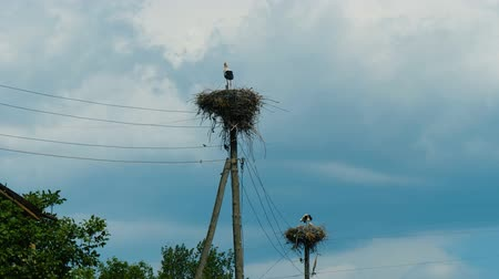 csajok : White storks in nests on power pillars in Armenian village agains stormy sky