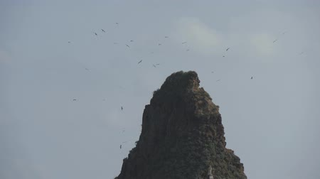 Flock of sea gulls fly around a high rocky mountain in cloudy sky. Slow motion