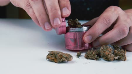 Grinder with medical marijuana buds in the male hand. Cannabis is a concept of herbal medicine