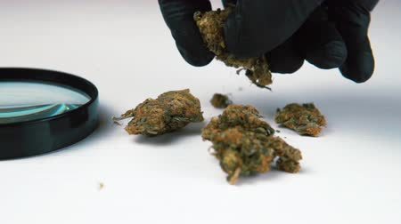Medical marijuana buds and magnifier on white table. Cannabis in the male hand close-up Vídeos
