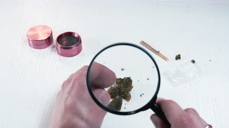 The marijuana buds with magnifying glass. Cannabis is a concept of herbal medicine
