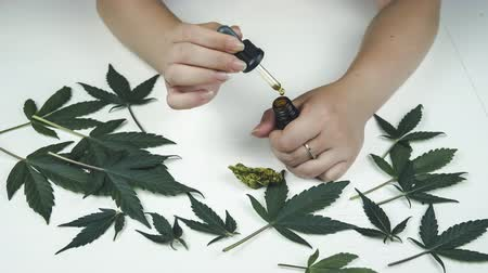 Cannabis oil in the female hand, Marijuana bud and leaves are on the white table. Cannabis is a concept of herbal medicine