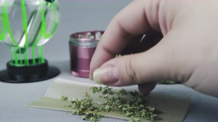 Close-up of persons hands and weed on rolling paper. Bong and grinder are on the background. Cannabis is a concept of herbal alternative medicine.