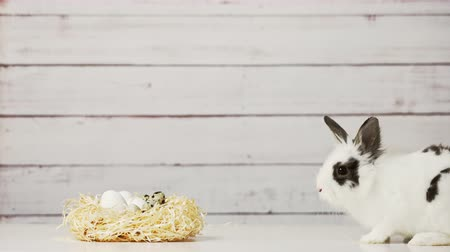 кролик : Close-up of cute white bunny is sitting near straw nest with eggs, on wooden background