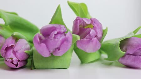 flower buds : Bouquet of spring flowers, lilac tulips on white background close up - 8 march, Valentine day or mothers day holiday concept