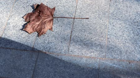 mortal : Dry brown maple leaf moving gliding on a stone sidewalk in sunlight, copy space Vídeos