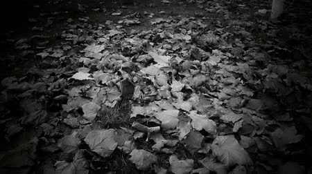 dead tree : falling leaves full on ground,black and white film.