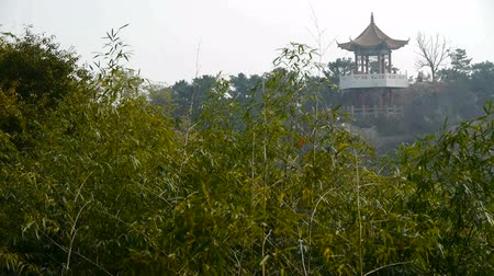 ormanda yaşayan : wind shaking bamboo,Pavilion on hill in distance. Stok Video