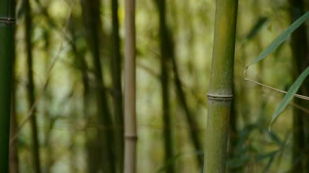 serene : wind shaking bamboo,quiet atmosphere.