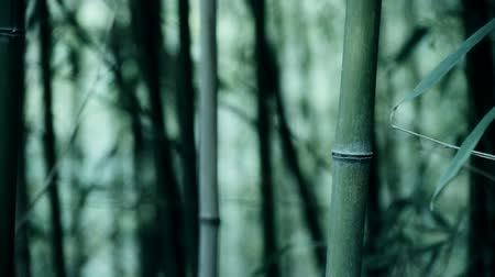 bambusz : wind shaking bamboo,quiet atmosphere.