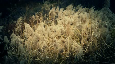 отражать : river reeds in wind,shaking wilderness.
