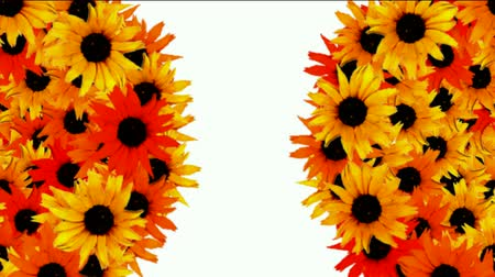 stokrotki : rotation sunflower balls as wedding background,disco neon flower pattern.