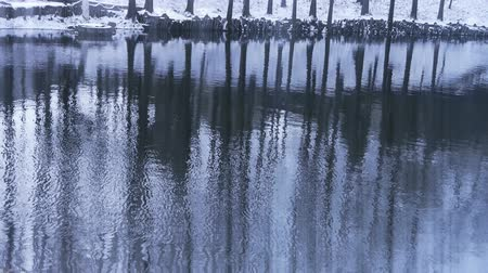 rainy : Forest reflection in water,ripple,snow.