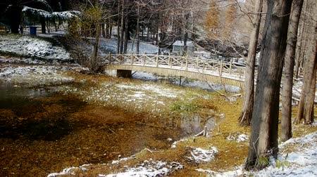 olvad : Forest and bridge reflection in water,metasequoia leave floating on lake,ripple,snow. Stock mozgókép