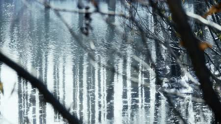 фотосъемка : Forest and branches reflection in swamps wetlands water,Sparkling ripple,snow.