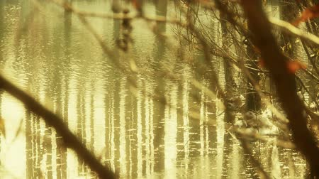 venkovské scény : Forest and branches reflection in swamps wetlands water,Sparkling ripple,snow.