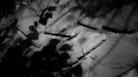 blemished : swing leaves silhouette shadow on stone wall at night. Stock Footage