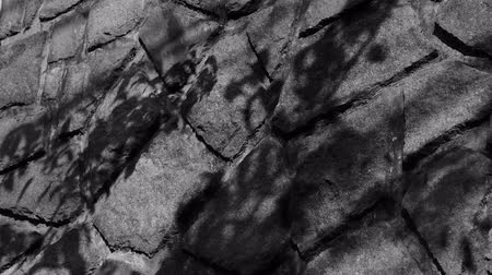 beton : swing leaves silhouette shadow on stone wall.
