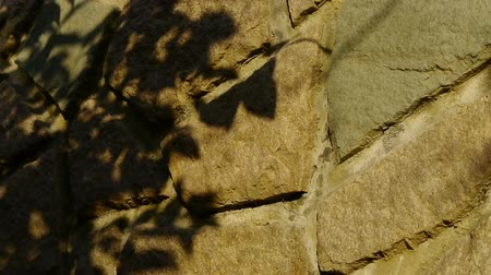 blemished : swing leaves silhouette shadow on stone wall.