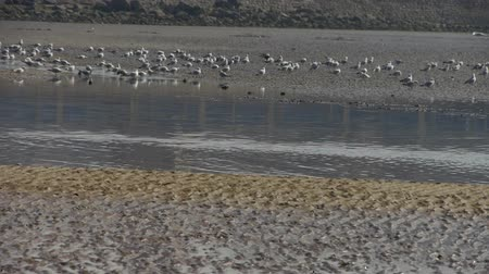 inseparable : seagull habitat at beach. Stock Footage