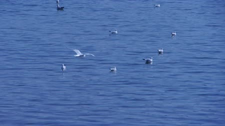 inseparable : Many seagull flying in sea beach. Stock Footage