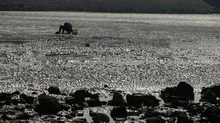 inseparable : A dig clams fishermen on beach,ebb.