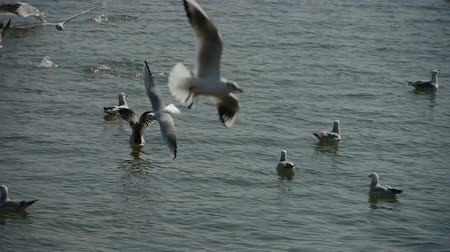 bird eye : seagull flying in sea. Stock Footage