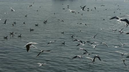 inseparable : Many seagull flying in sea.