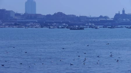 inseparable : Many seagull flying in sea,reef,Seaside dams of QingDao city,Yachts ship & Vessels docked at pier port..